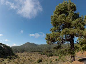 Hoya del Gallego, Mercader