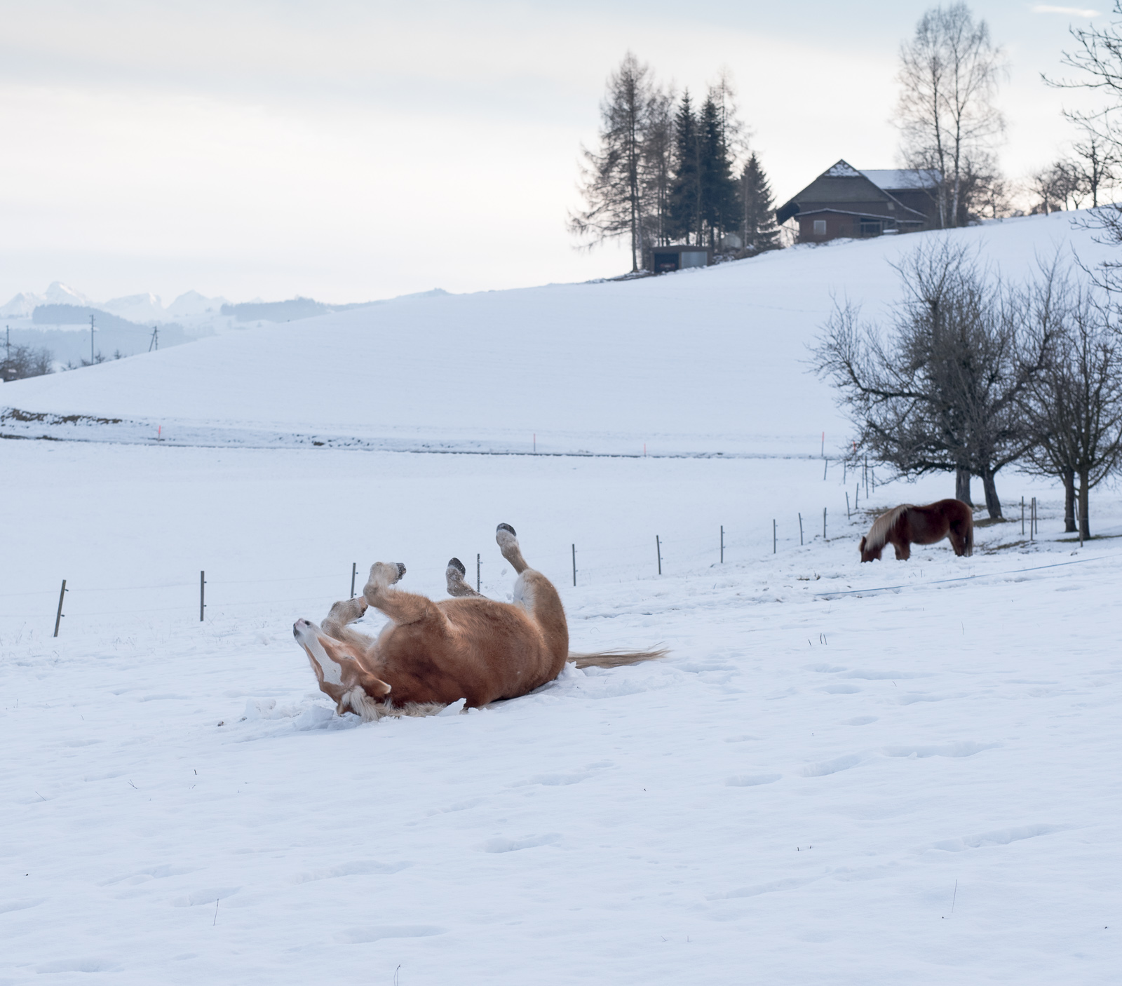 Ah, Schnee!