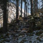 Durch den Wald hinauf