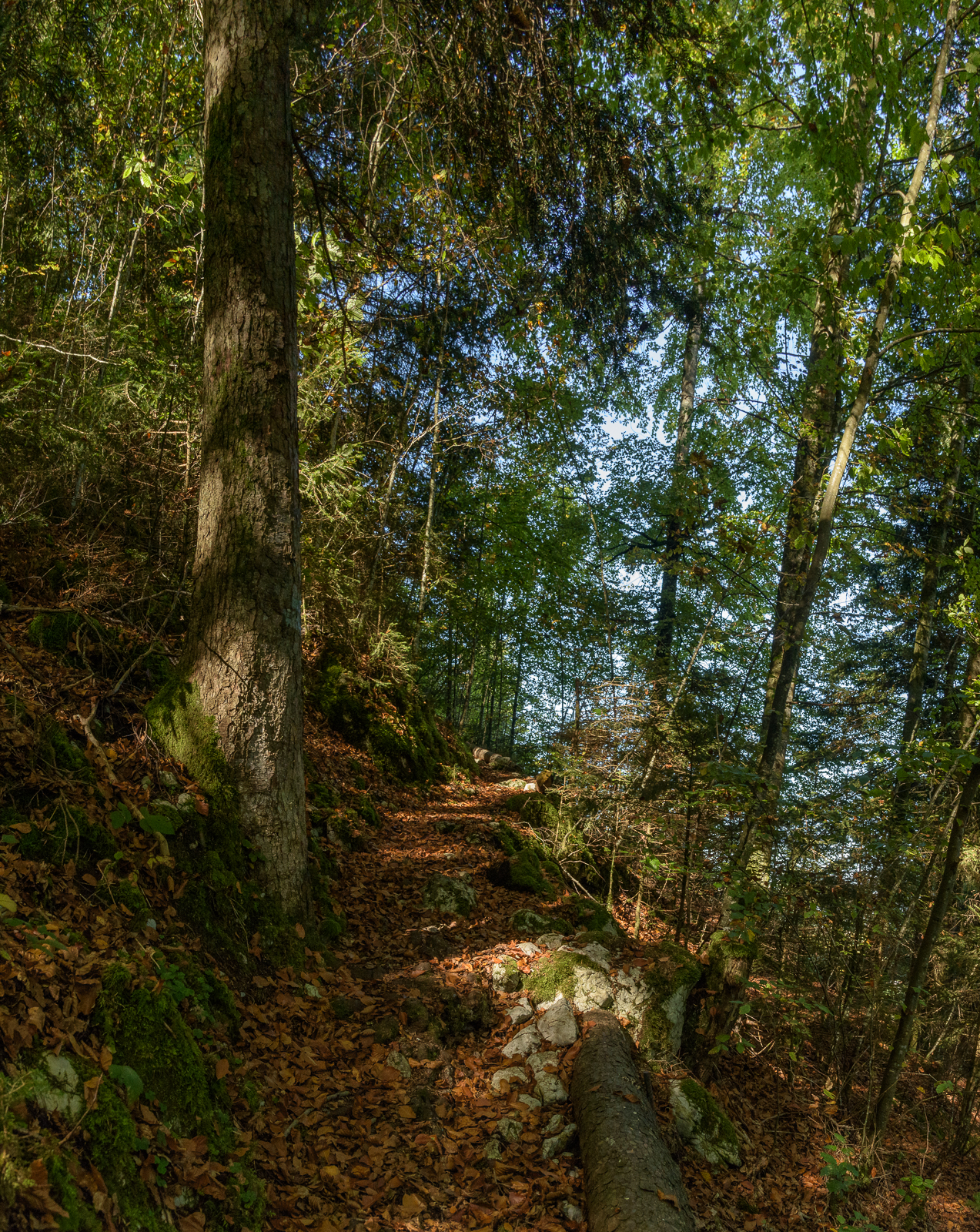 Herbstwald am Stockhorn