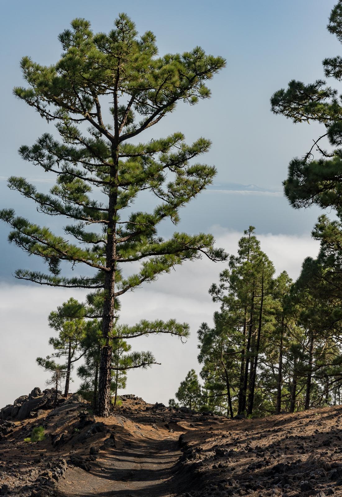 Ausblick nach La Gomera